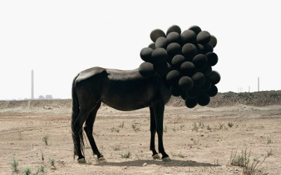 ANDREA GALVANI – death of an image